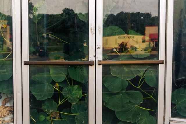 rastliny za otváracími dverami.jpg
