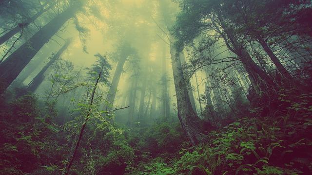 les na jeseň.jpg